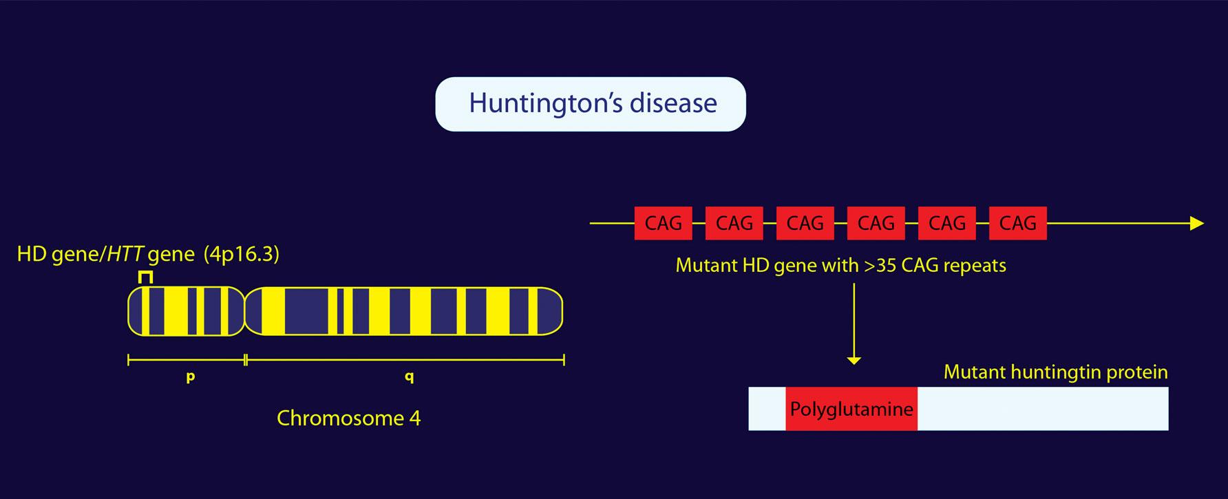 rccm-huntington1